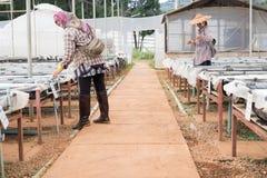 水耕的花匠在农场 生长使用n的植物方法  图库摄影