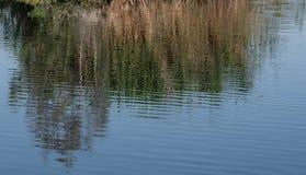 水背景色的纹理 库存图片