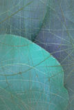 水色背景蓝色作成蜘蛛网状 库存照片