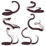 水蟒蛇 库存例证