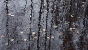 水表面上的叶子 影视素材