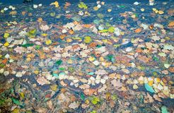 水表面上的干燥叶子浮游物 库存图片