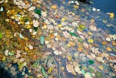 水表面上的干燥叶子浮游物 免版税库存图片
