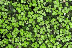 水表面上的绿色花 免版税库存照片