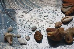 水近秋天、滴,贝壳和海 免版税图库摄影