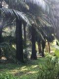 水通过棕榈树散发光 图库摄影