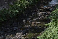 水道沾染与植被 库存图片