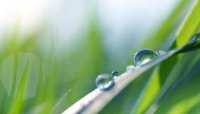 水露水透明下落在草关闭的 免版税库存照片