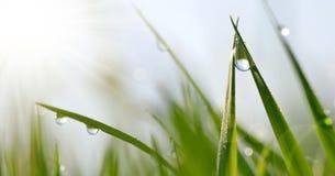 水露水透明下落在草关闭的 图库摄影