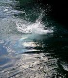 水飞溅图象,夏天题材, 免版税图库摄影