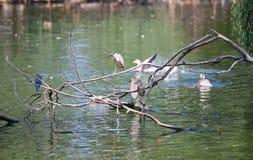 水鸟 库存照片