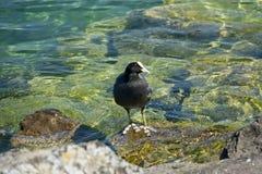 水鸟 图库摄影