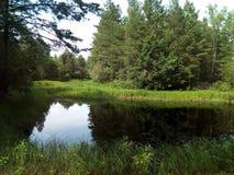水,湖,风景,自然,河,天空,反射,树,森林,夏天 免版税库存图片