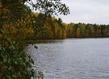 水,湖,风景,自然,河,秋天,天空,树,树,反射,森林,蓝色,秋天,池塘,公园,云彩,绿色,夏天 库存图片