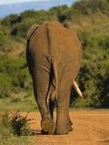 永恒的非洲 免版税库存照片