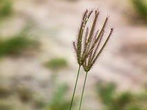 永远一起 自然花卉生活方式 库存图片