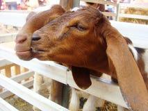 永远动物爱  免版税库存图片