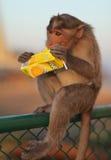 汁液猴子 库存图片
