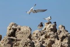寻求地方的海鸥登陆 免版税图库摄影