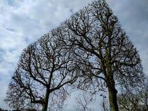 求立方的几何树在冬天 库存图片