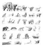 汇集动物 与铅笔的剪影 库存例证