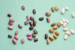 汇集套各种各样的干肾脏豆类扁豆紧密隔绝在蓝色背景 健康的食物 免版税库存照片