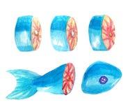 汇集套红色分鱼刀片断  分开的片断、附近说谎被削减的片断,尾巴和鱼的头 免版税库存图片