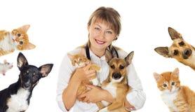 汇集宠物 库存图片