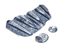 汇集炸药和巨大的orthoceras化石雕塑在黑大理石 免版税图库摄影