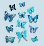 汇集12蓝色幻想蝴蝶昆虫 免版税库存图片