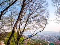 汉城韩国,与树蓝天的都市风景背景 免版税库存图片