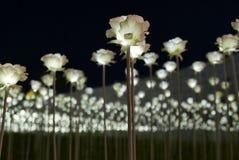 汉城,韩国5月19日2017年:在Dongdaemun设计广场的LED玫瑰 库存图片