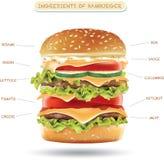汉堡包成份 传染媒介infographics 图库摄影