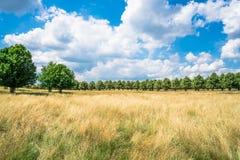 汉普顿法院公园在南伦敦,英国 免版税库存图片