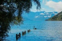 汉米尔顿湖 免版税库存照片