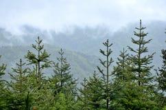 汉语湖北武当山 免版税库存图片