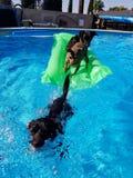水池与狗的时间乐趣 库存照片