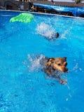 水池与狗的时间乐趣 免版税图库摄影