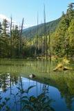 水池反射的树和山02 库存照片