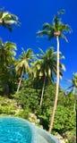 水池和棕榈树在热带风景 库存照片