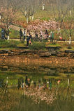 水池在植物园里 库存图片