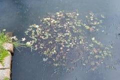 池塘与秋天秋叶绿色yellowe的水表面 免版税库存照片