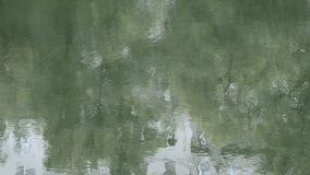 池塘光滑的表面上的起波纹的水  股票录像