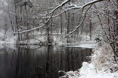 池塘冬天 库存图片