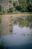 池塘反射 免版税库存图片