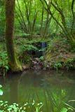 池塘反射 库存图片