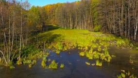 池塘和明亮的秋天森林的鸟瞰图它的岸的 股票视频
