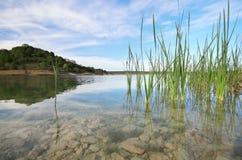 池塘和春天湖 库存图片