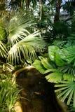 池塘和棕榈树在植物园里 免版税图库摄影
