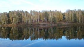 池塘和森林 免版税库存图片